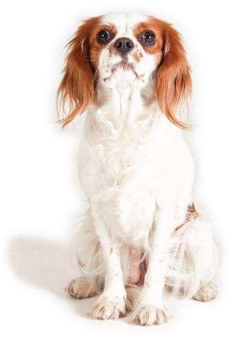 Dog-Squad_Testimonials-Dog